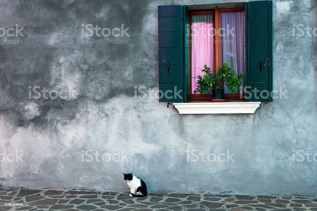 Cat sits under the window with flowers,Burano,italy stock photo