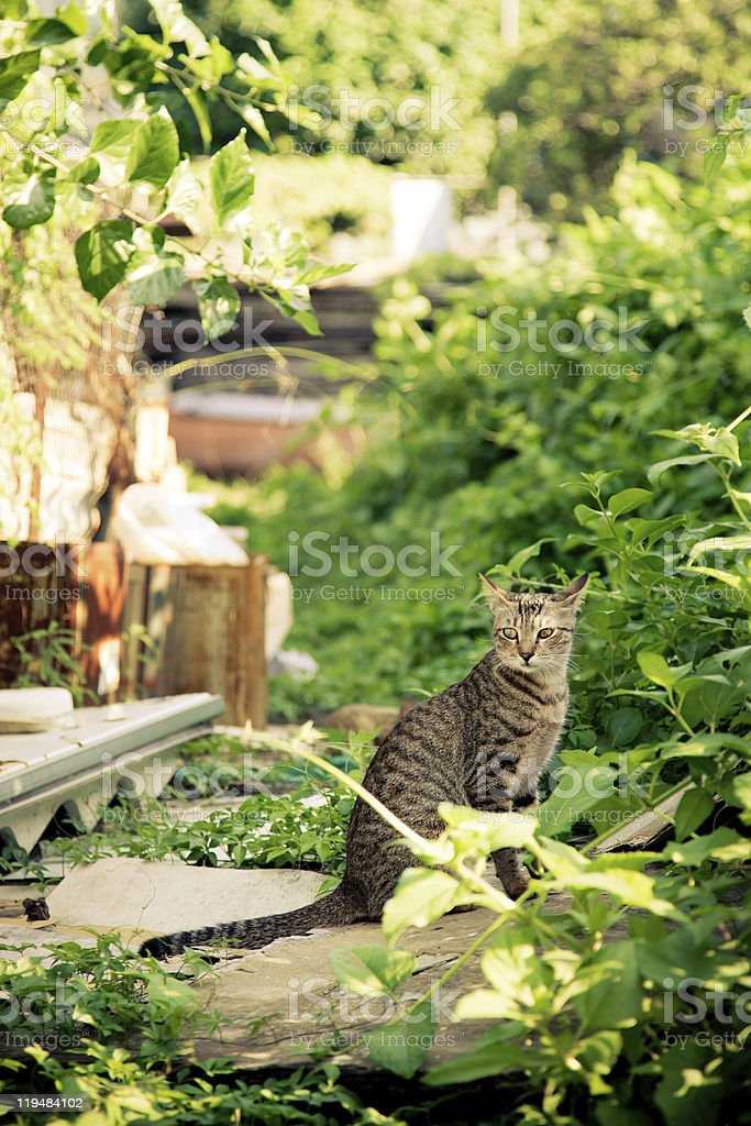 Cat sitting in the backyard stock photo