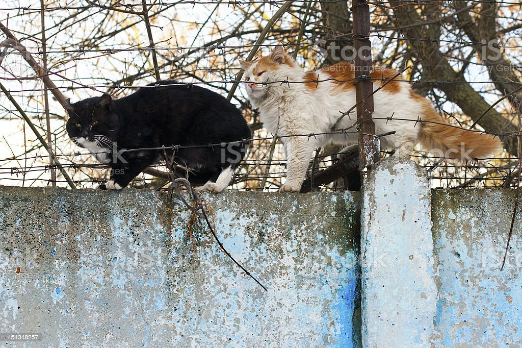 cat sitting on a concrete fence royalty-free stock photo