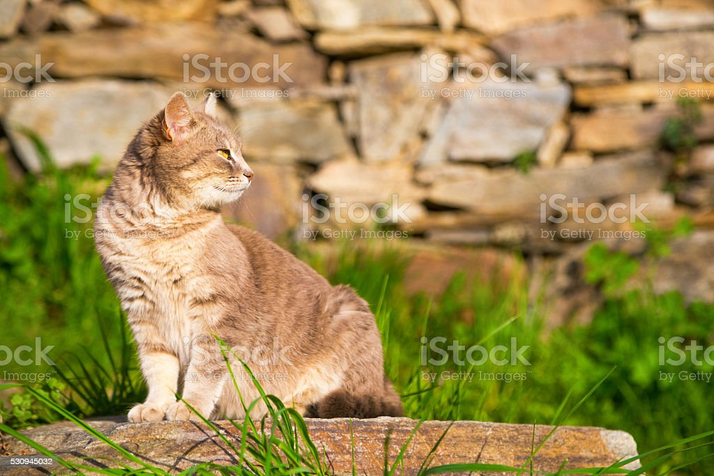 Cat sitting on a garden stone stock photo