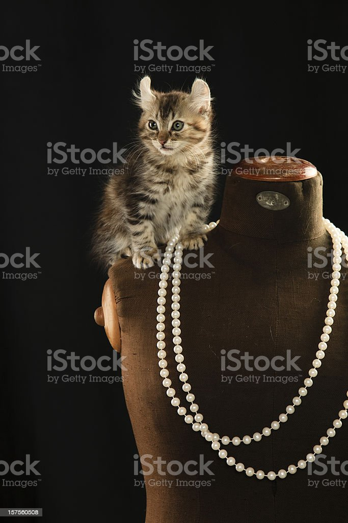Cat sitting on a mannequin wearing a double sting of pearls. stock photo