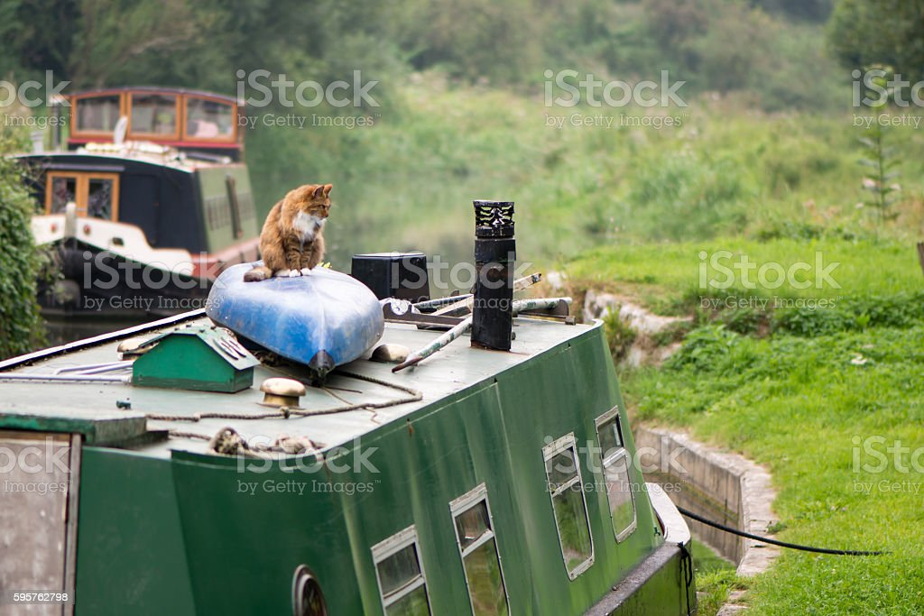Cat sitting on canoe on roof of canal boat stock photo