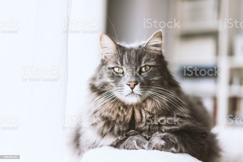 Cat sitting on couch stock photo