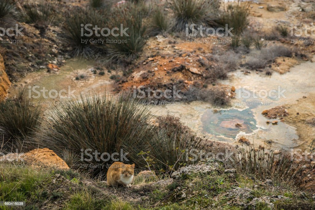 Cat sitting on field of hermal springs  in Loutra Edipsou stock photo