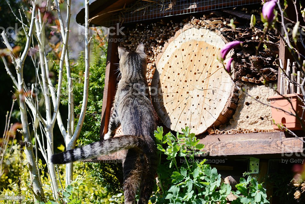 cat sitting on hotel insect shelter for wild bees stock photo