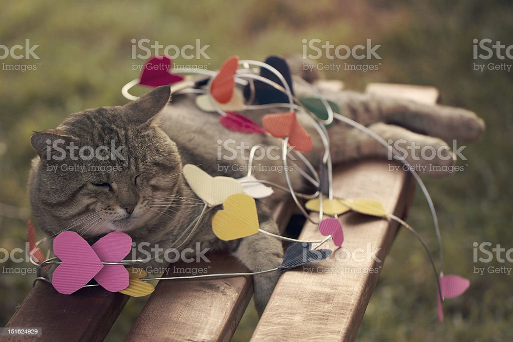 Cat sitting on multicolored hearts stock photo