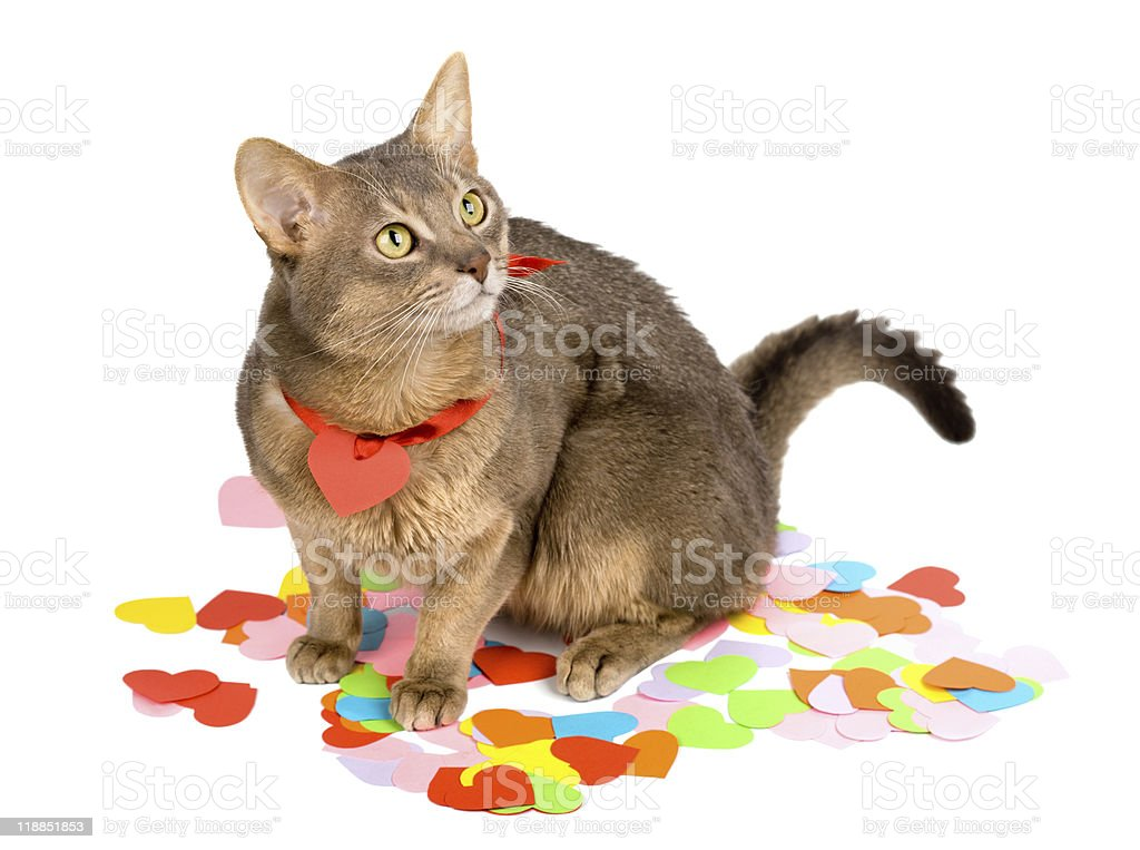 Cat sitting on paper hearts stock photo