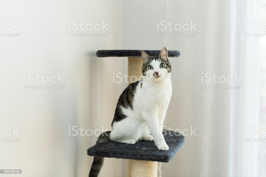 cat sitting on the cat's plush house stock photo