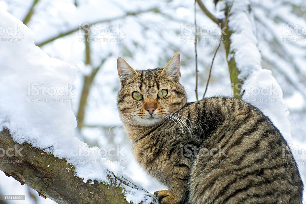 Cat sitting on the snowy tree royalty-free stock photo