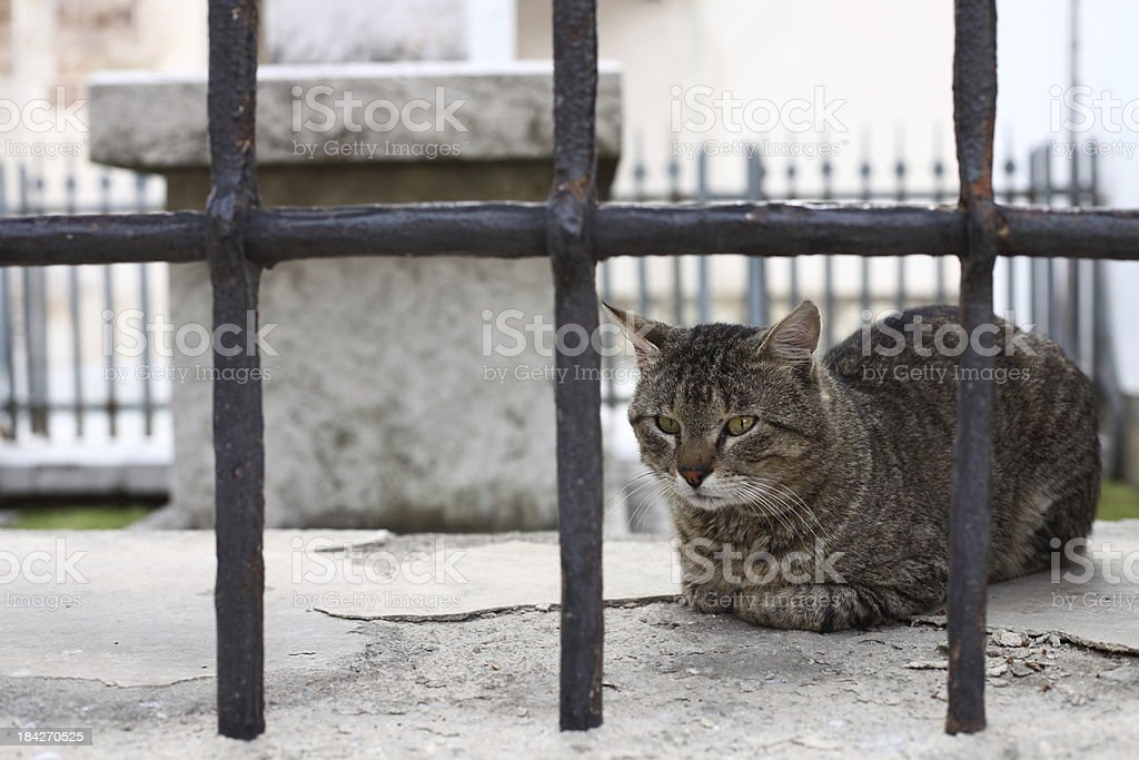 Cat sitting on the wall stock photo