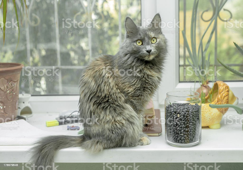 cat sitting on the windowsill royalty-free stock photo