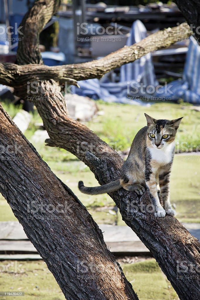 Gato sentado en el árbol foto de stock libre de derechos