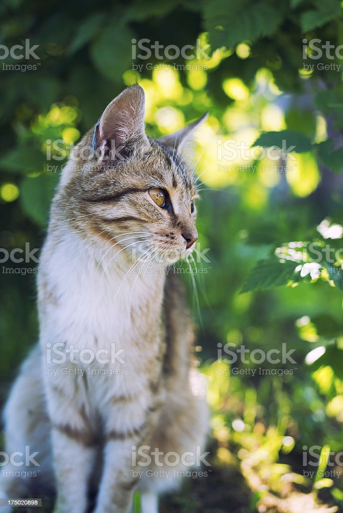 Cat sitting royalty-free stock photo
