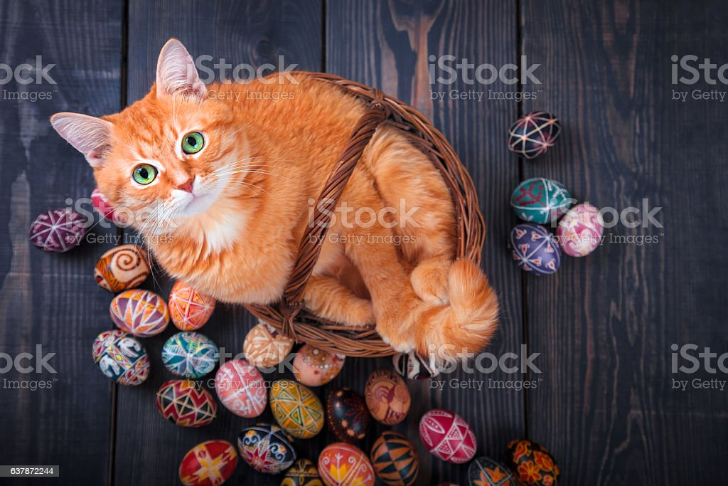 Cat sitting with Easter eggs. stock photo