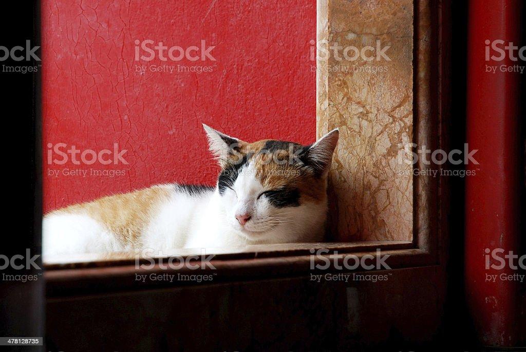 Gato sono Atrás do Templo de porta foto royalty-free