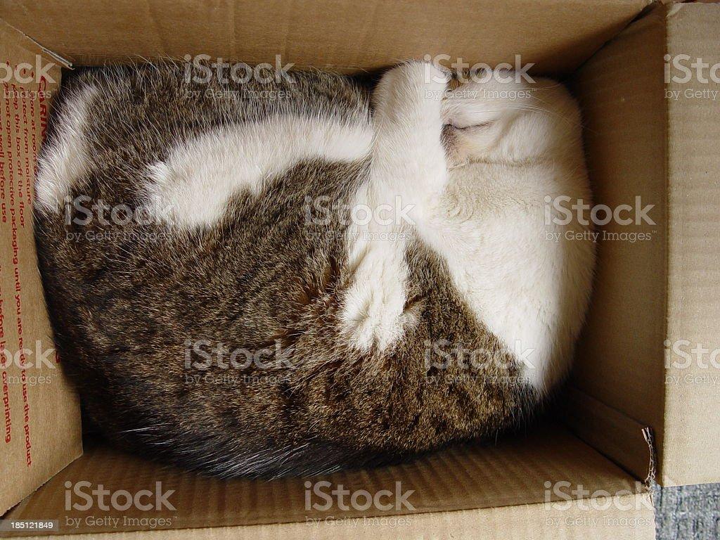A cat sleeping deep inside a box stock photo