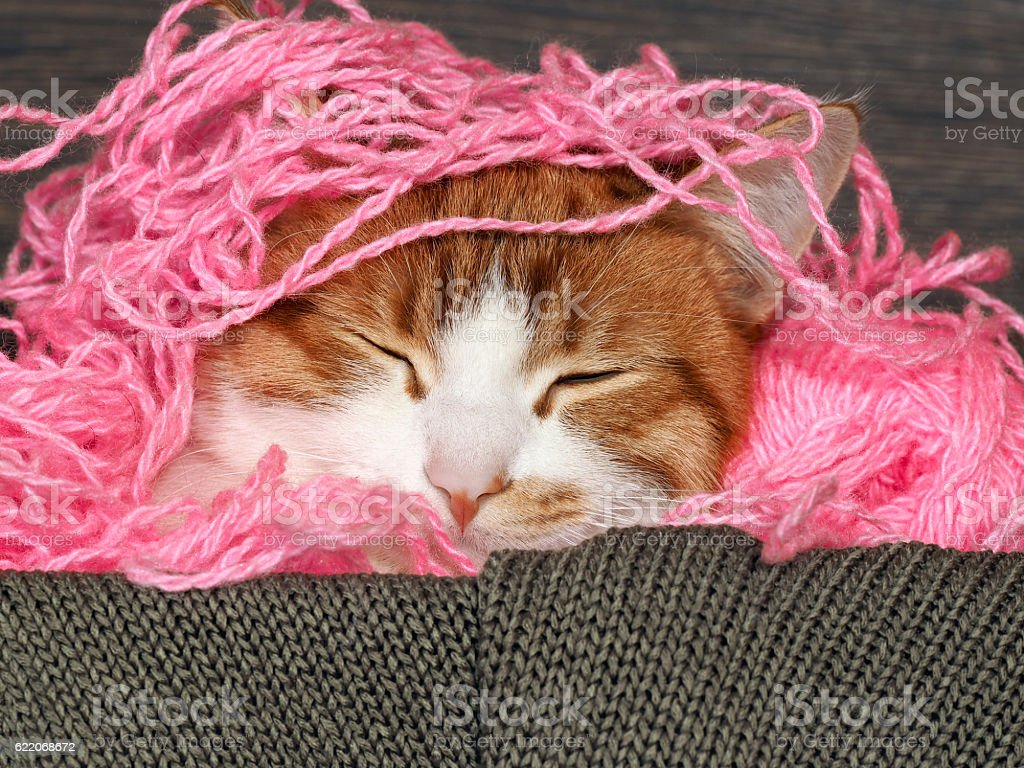Cat sleeping in pink entangled Threads stock photo
