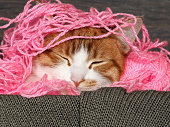 Cat sleeping in pink entangled Threads