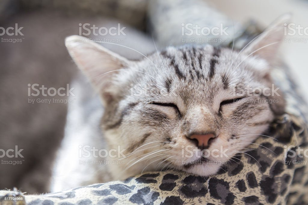 cat sleeping in the cat bed stock photo