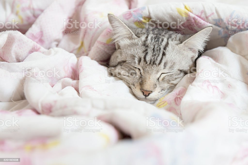 cat sleeping in the pink floral blanket, selective focus stock photo