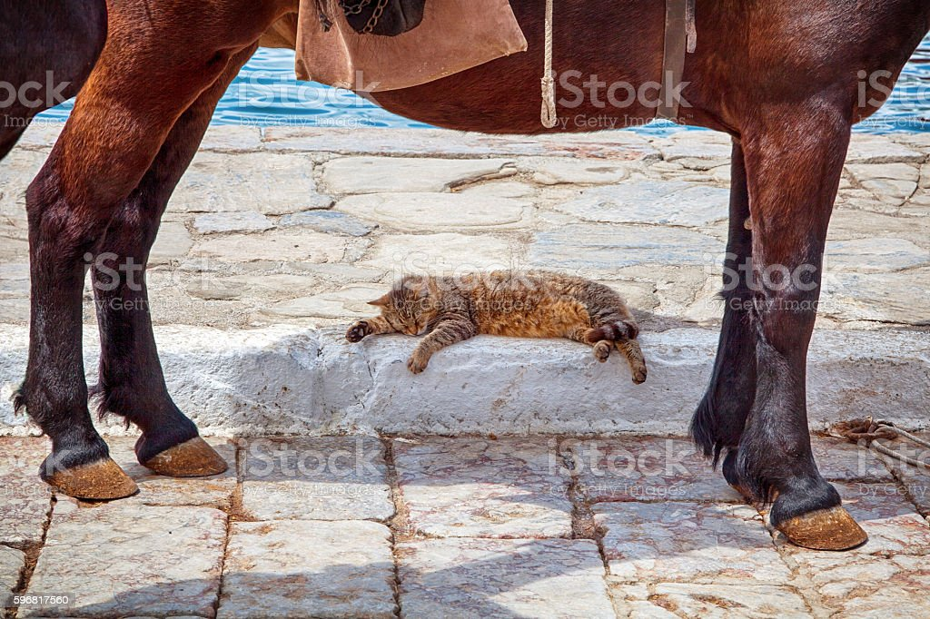 Cat sleeping in the shadow of a donkey stock photo