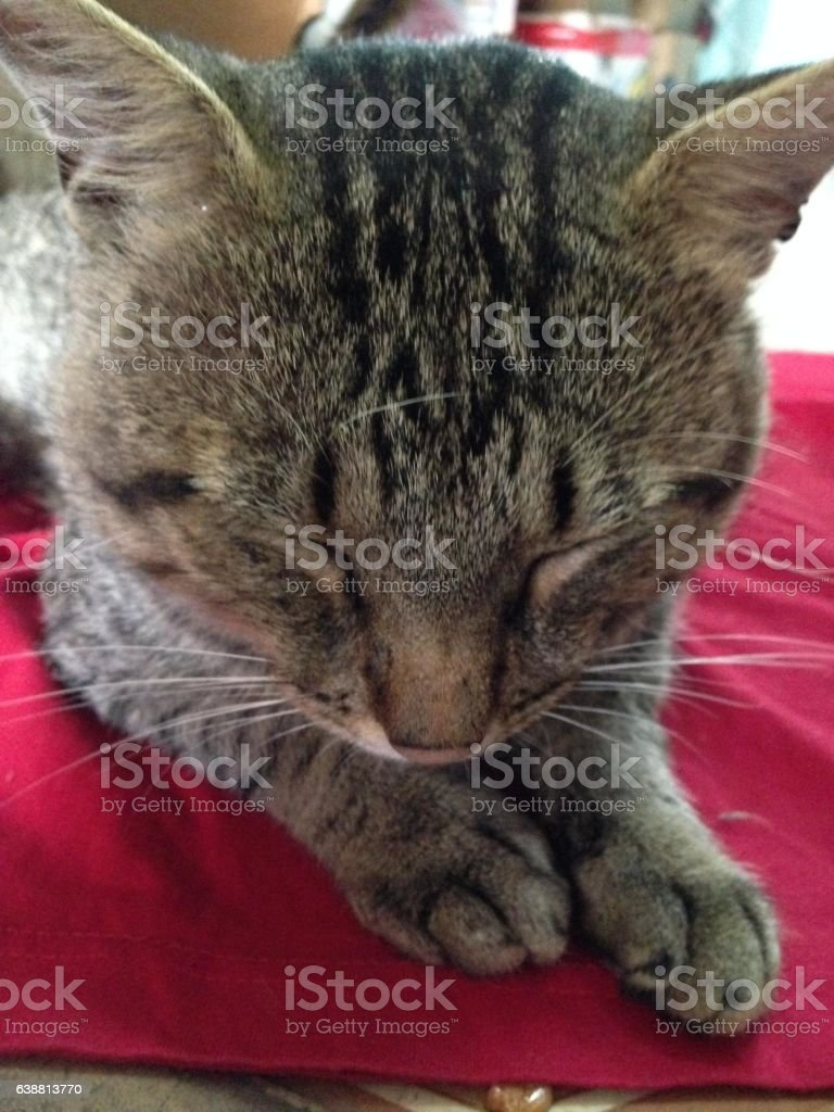 cat sleeping on a bed stock photo