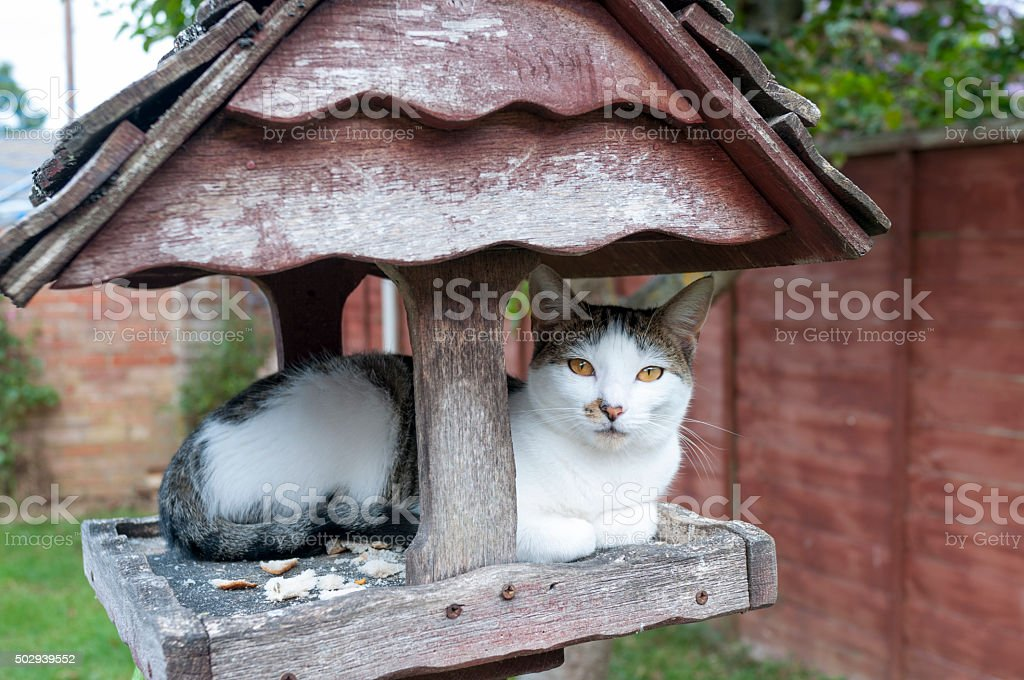 Cat Sleeping On A Bird Feeding Table stock photo