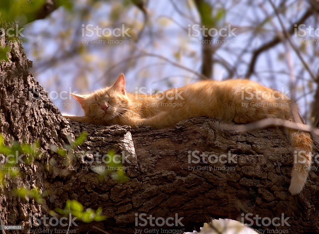 Cat sleeping on a tree branch stock photo