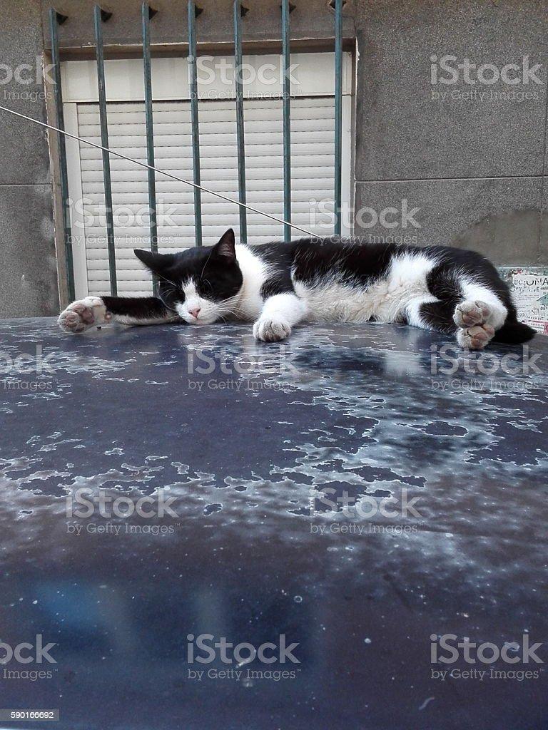 Cat sleeping on car roof stock photo