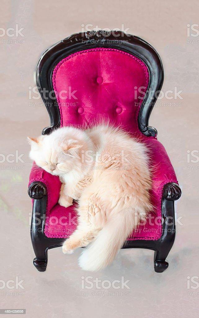 Cat sleeping on pink velvet vintage chair stock photo