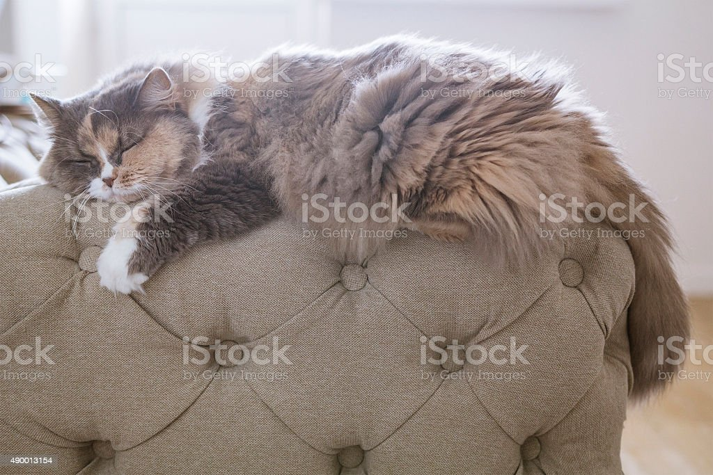 cat sleeping on the couch stock photo