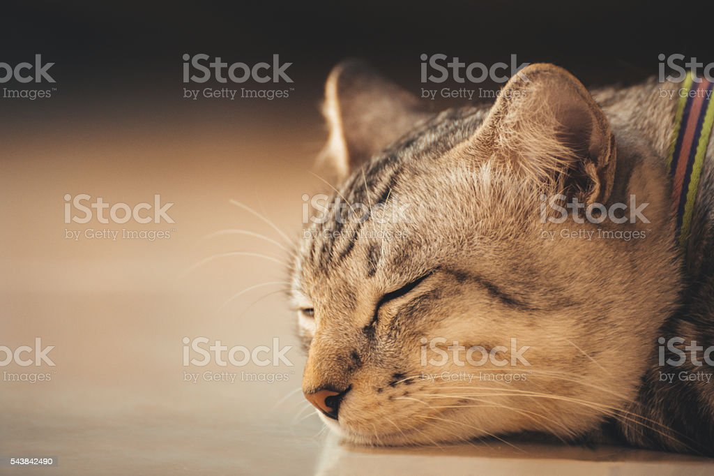 cat sleeping on the floor, sleeping cat. vintage photo stock photo