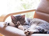 cat sleeping on the sofa