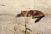 Cat sleeping outdoor