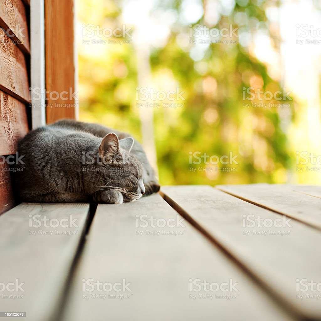 Cat sleeping outside royalty-free stock photo