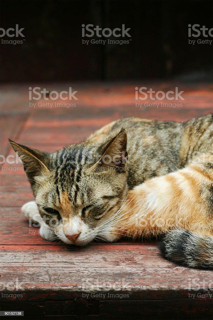 Cat slept en mesa de madera foto de stock libre de derechos
