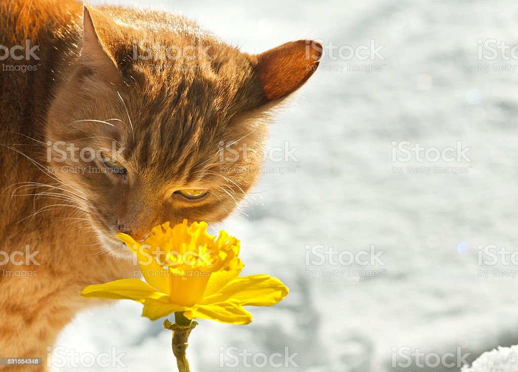 Cat sniffs stock photo