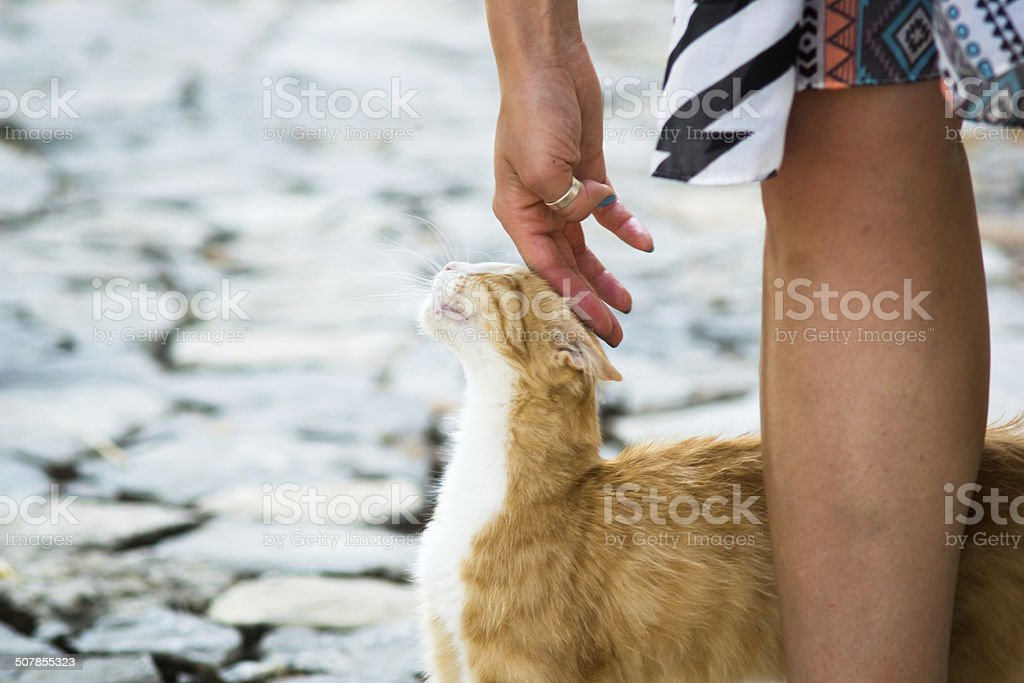 Cat spotted somewhere on Crete stock photo