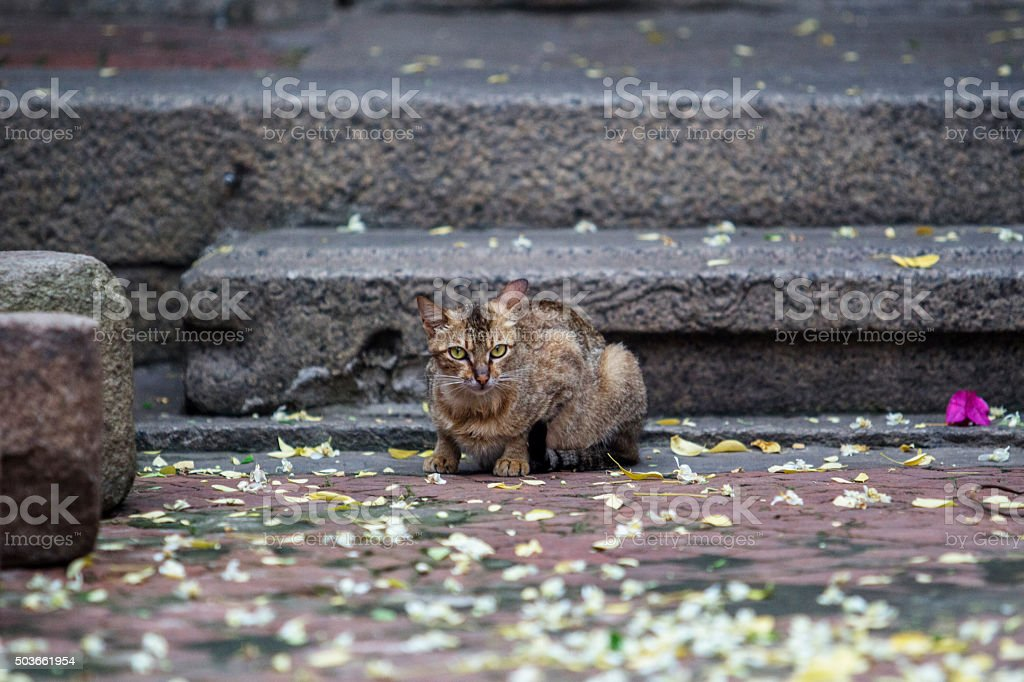 cat squatting on ground, petals falling down stock photo