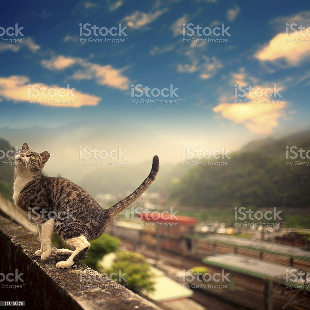 Cat stand on the wall stock photo