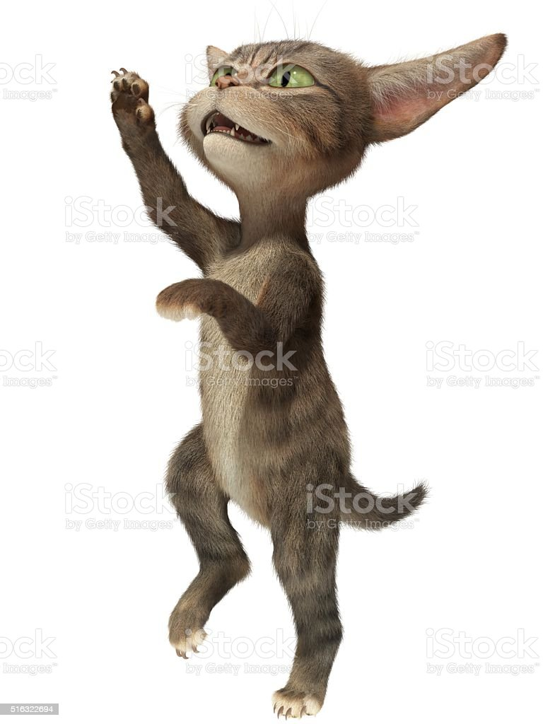 Cat standing on hind legs stock photo