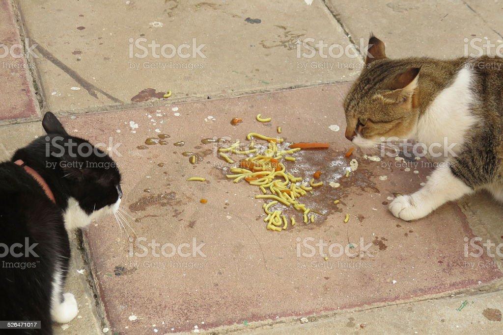 cat standoff stock photo