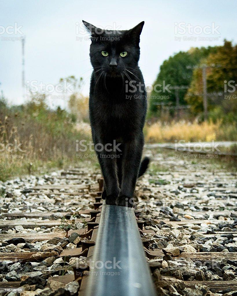 Cat Staring on Train Tracks stock photo