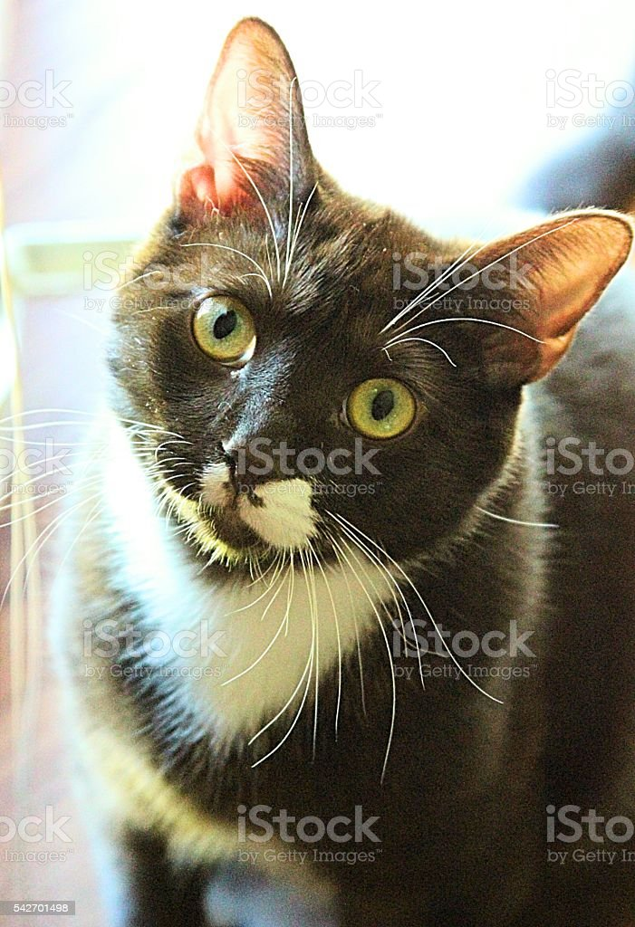 cat staring, tilted head stock photo