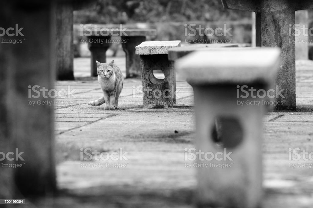 Cat stayed away from me stock photo
