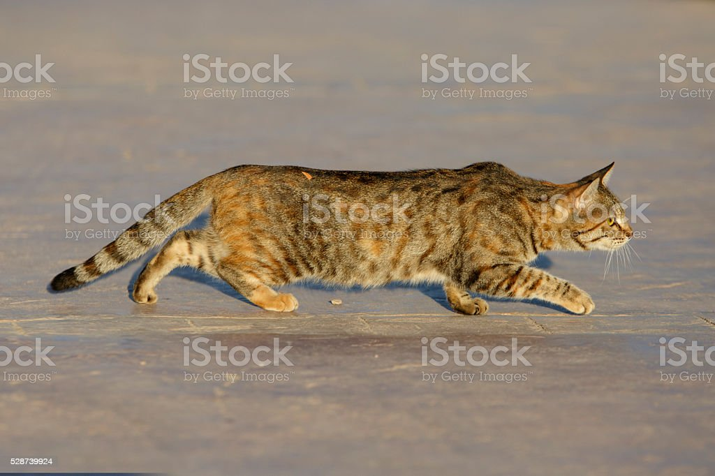 Cat Steals stock photo