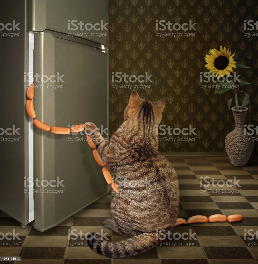 Cat steals sausages stock photo