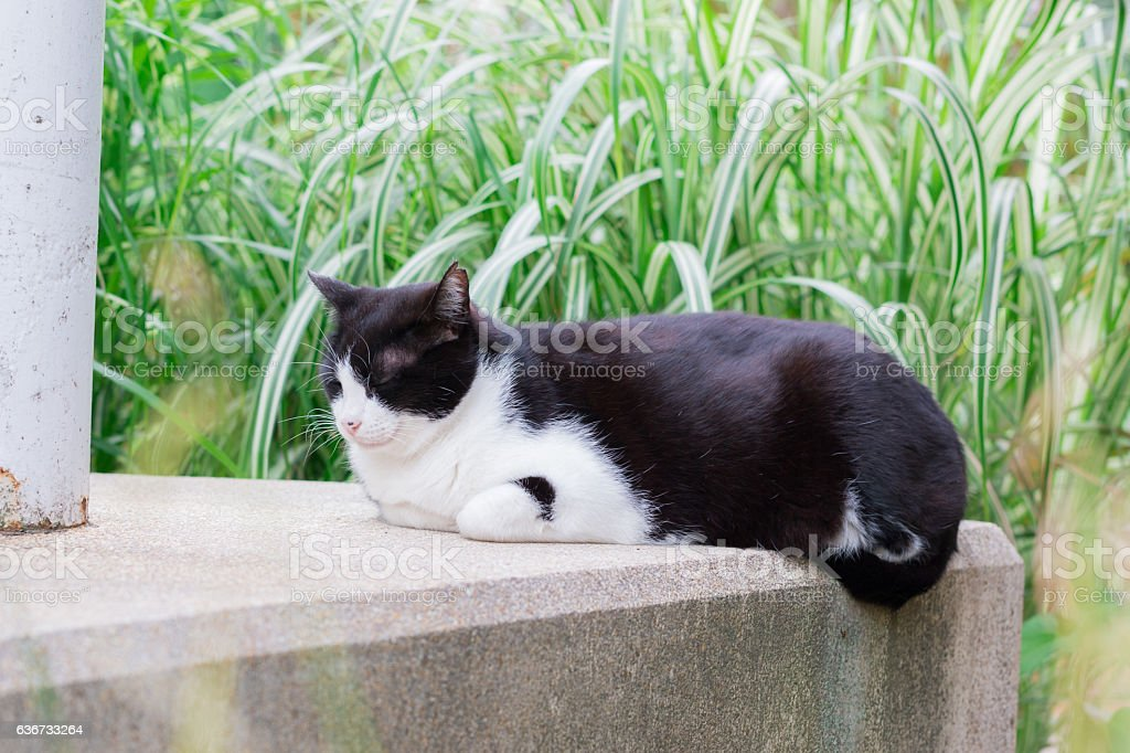 Cat striped black and white sitting and sleeping. stock photo