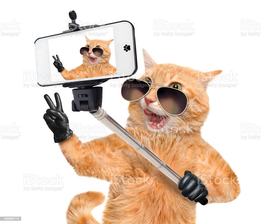 Cat taking a selfie with a smartphone. stock photo
