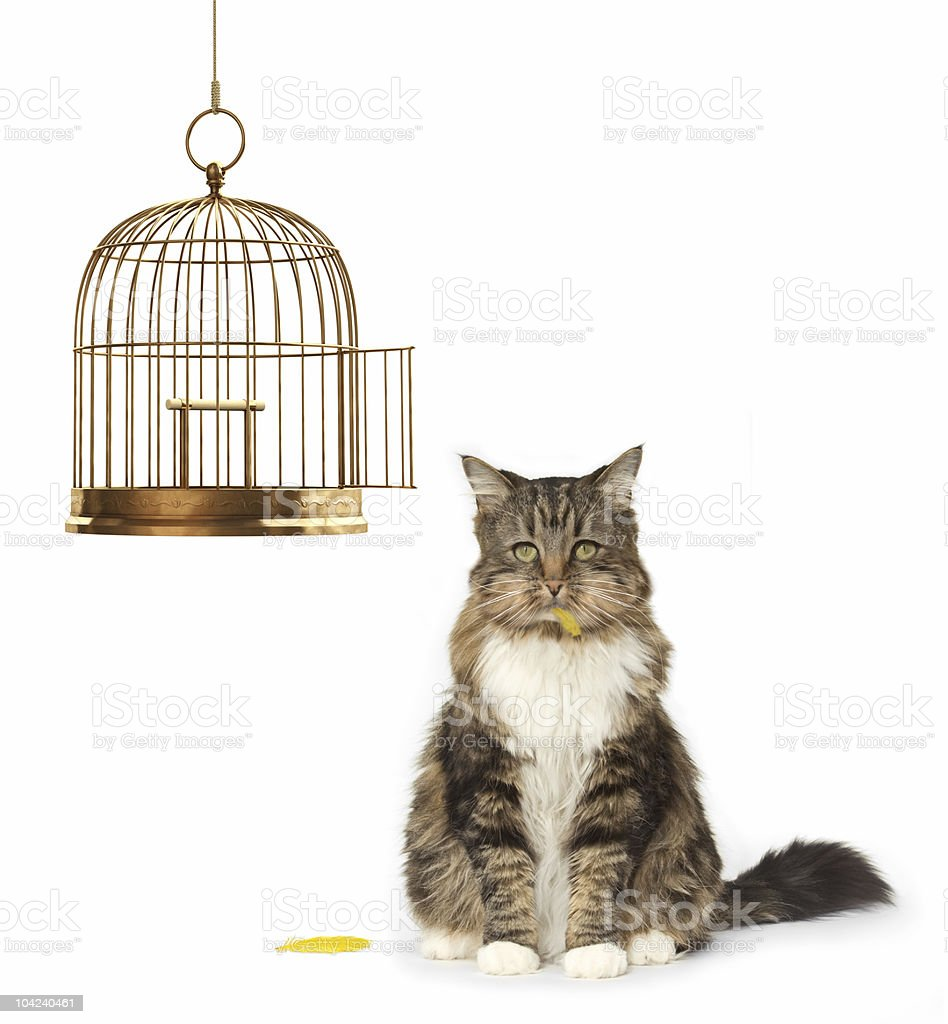 Cat that Ate the Canary stock photo